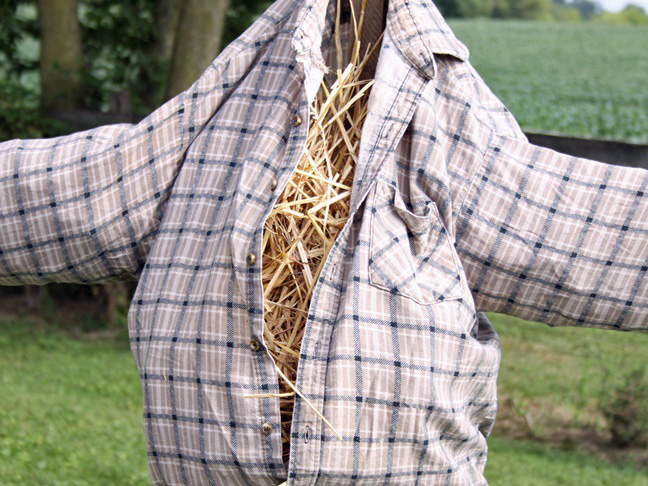 filling the body cavity of the scarecrow