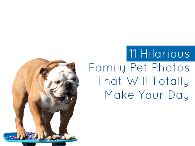11 Hilarious Pet Photos That Will Make Your Day on @ItsMomtastic