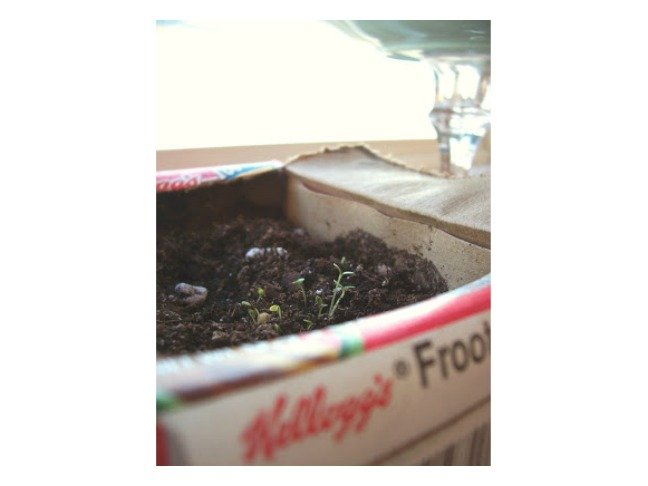 Mini Cereal Box Seed Starters