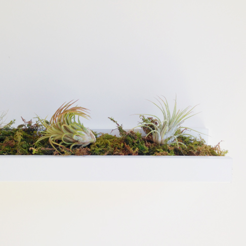 Air Plant Picture Shelf from Hot for Houses